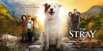 The Stray: One Dog's Impact